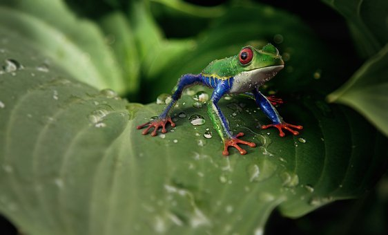 Frog, Animal, Animal World, Exotic
