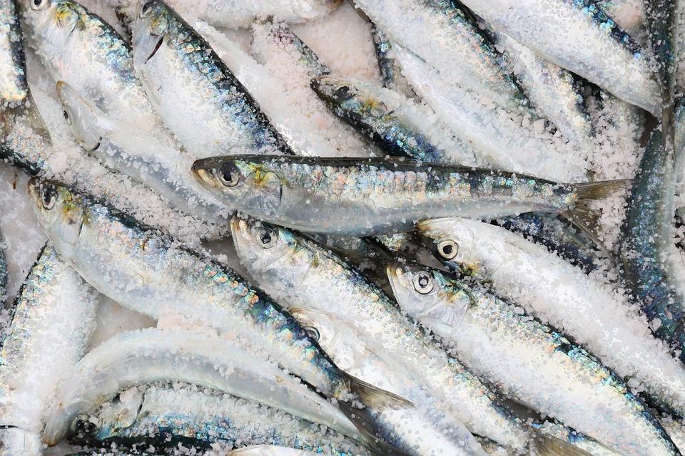 Maroko, Essaouira, Pelabuhan, Ikan, Sarden, Menangkap
