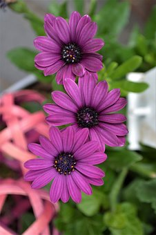 Purple flowers images pixabay download free pictures purple flower purple flower blossom mightylinksfo Image collections