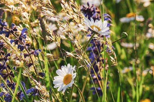 Spring flowers images pixabay download free pictures daisies flowers bloom nature mightylinksfo Images
