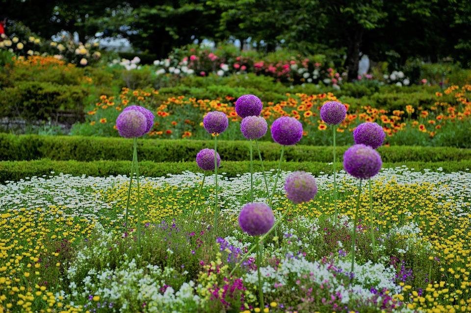 花, 花畑, 庭