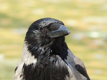 Veľké čierne vtáky blog