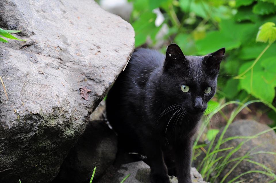 čierna mačička fotky zadarmo www africké porno videá com