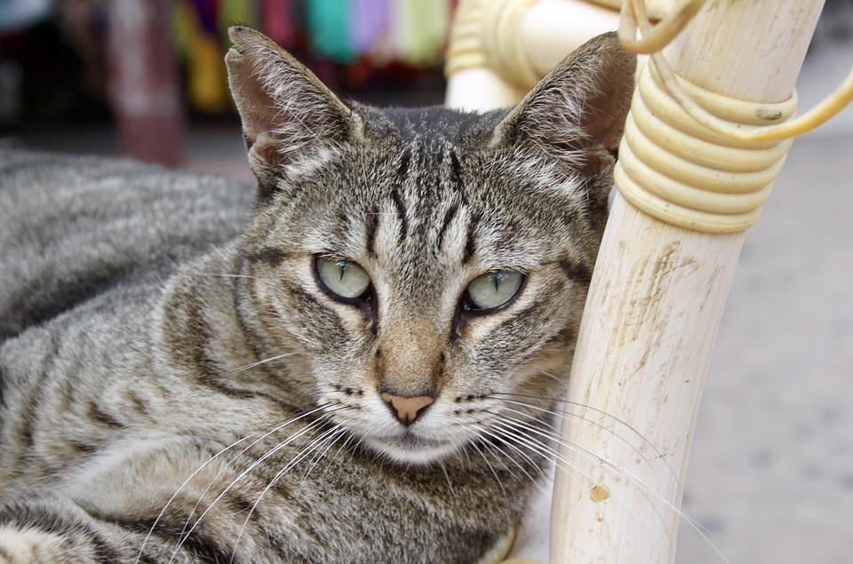 5fd006f85c23 Γάτα Γάτες Κατοικίδια Ζώα - Δωρεάν φωτογραφία στο Pixabay
