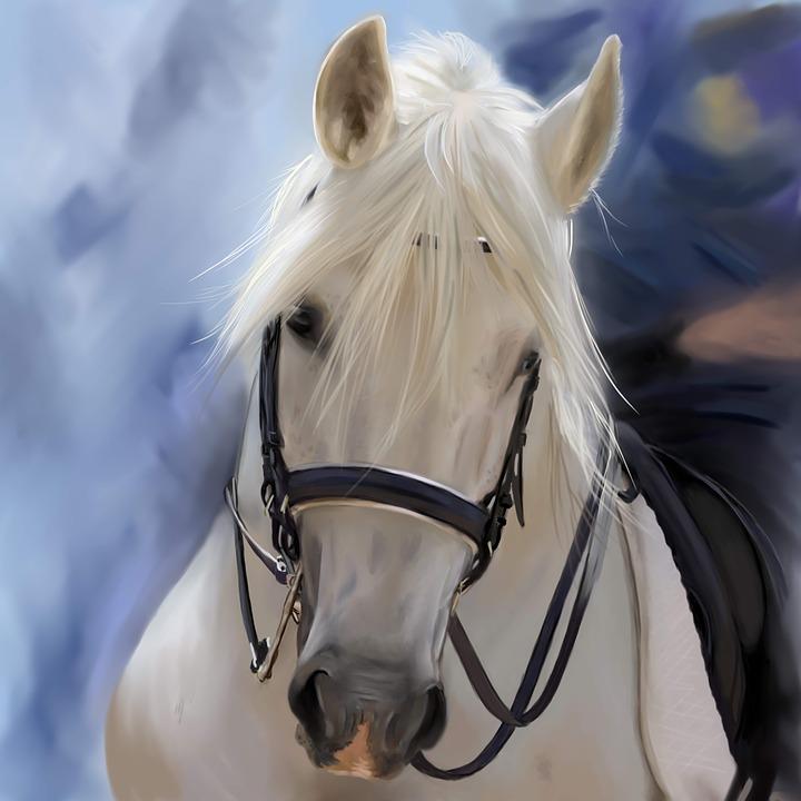 At Kafası Atlar Boyama Pixabayde ücretsiz Resim