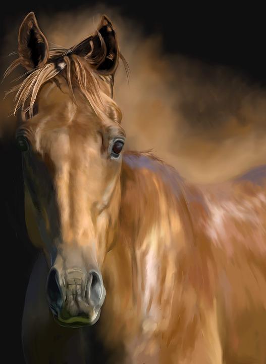 Ati Atlar Midilli Pixabayde ücretsiz Resim