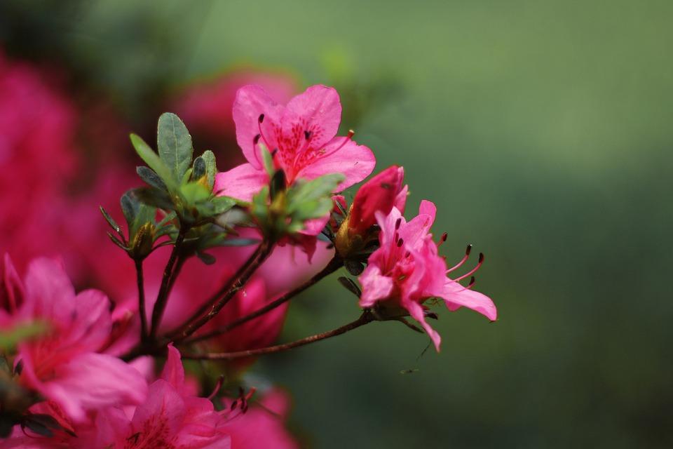 Flower pink free photo on pixabay flower pink pink flower floral spring summer mightylinksfo Images