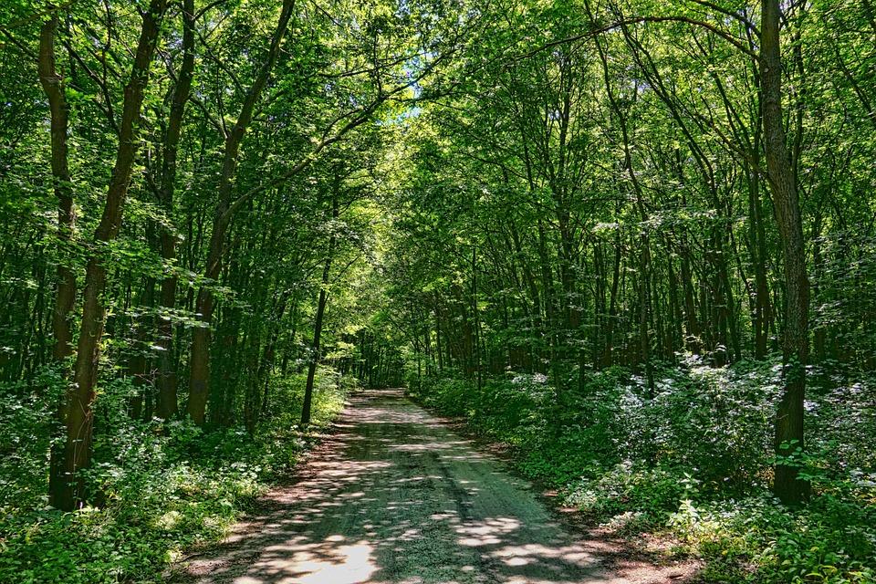 Las Liściasty, Ścieżka Lasu, Wiosna W Lesie, Zielony