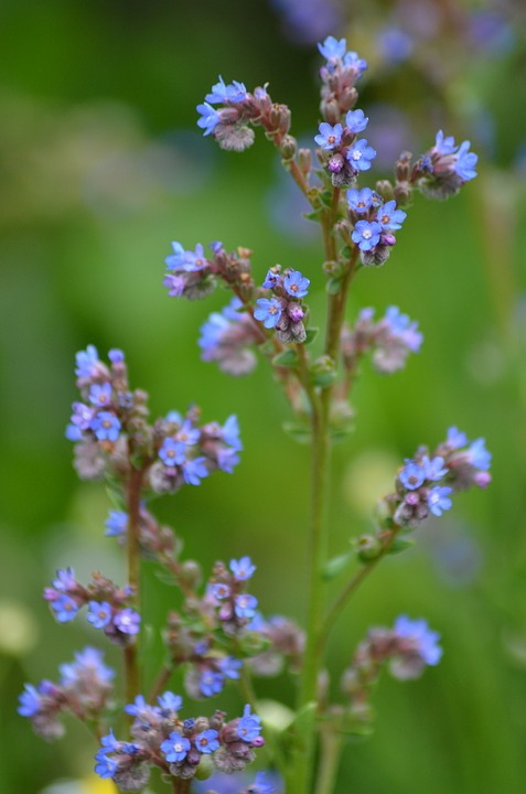Piccoli Fiori Viola.Piccoli Fiori Viola Blu Piccolo Foto Gratis Su Pixabay