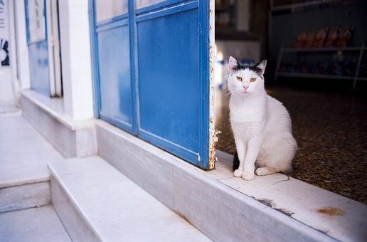 Katze, Haustier, Tier, Straße