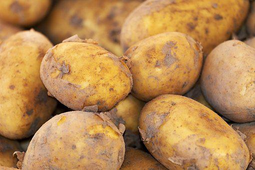 Potato, New Crop, Erdfrucht, Field