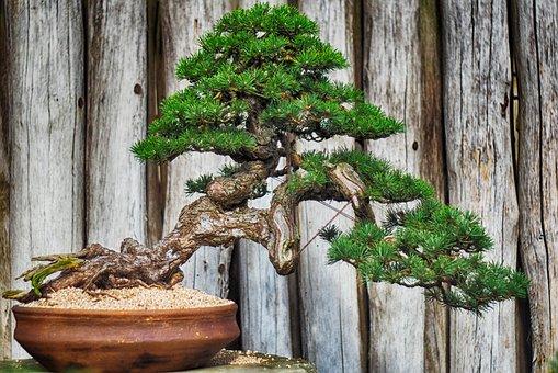 Wood, Tree, Plant, Ceramics, Bonsai