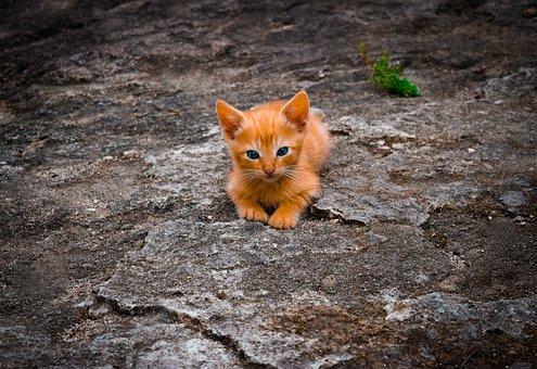 Cat, Feline, Cute, Lying, Nature, Animal
