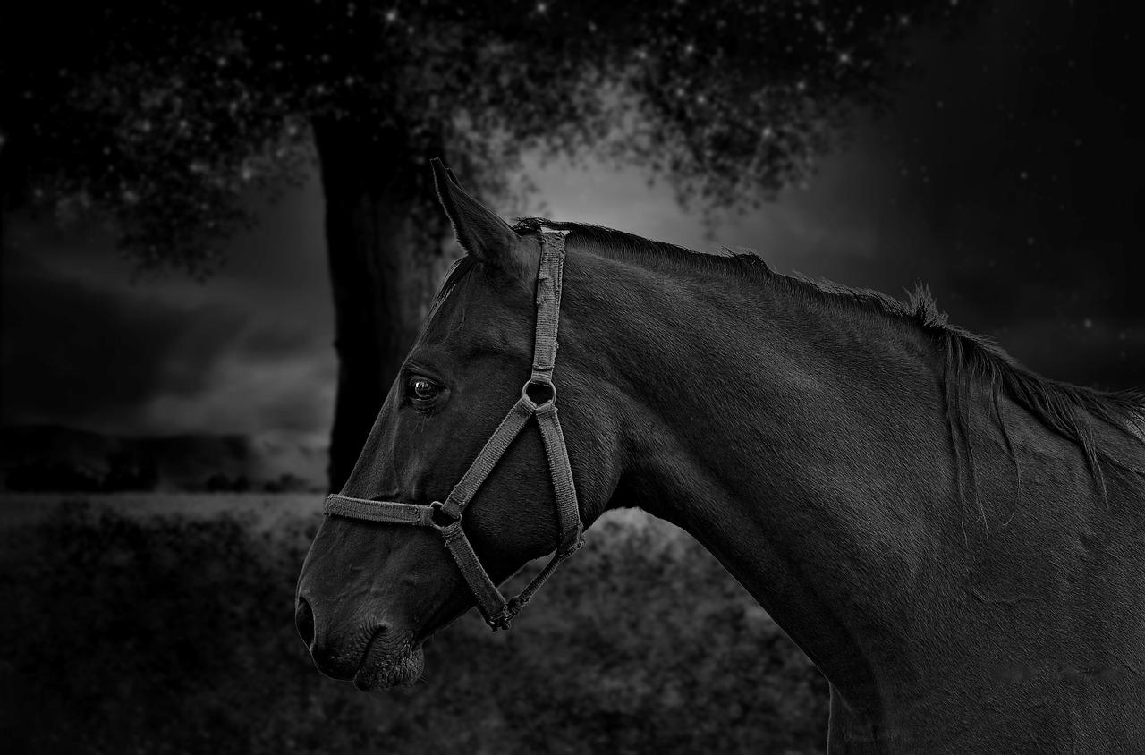 Horse Portrait Black Free Photo On Pixabay
