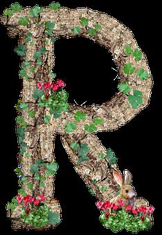 100+ Free Letter R & R Images - Pixabay