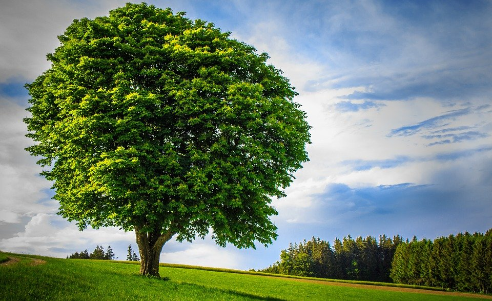big tree images  Big Tree Lonely Handsome · Free photo on Pixabay