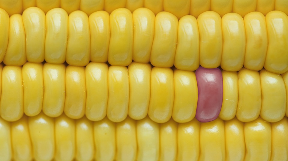 Background, Closeup, Corn, Corn Background, Texture
