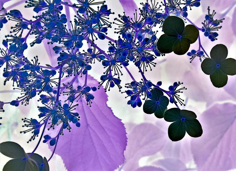 Fleur Dessin Floral Photo Gratuite Sur Pixabay
