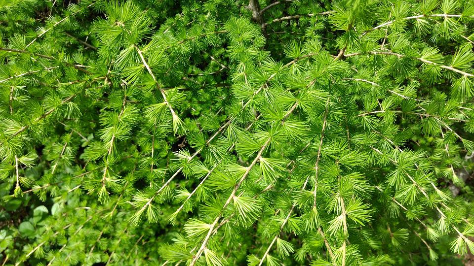 Verde Foglie Sfondo Foto Gratis Su Pixabay