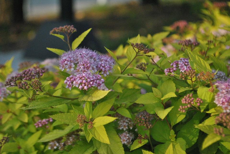 Giardini in fiore fiori giardino foto gratis su pixabay