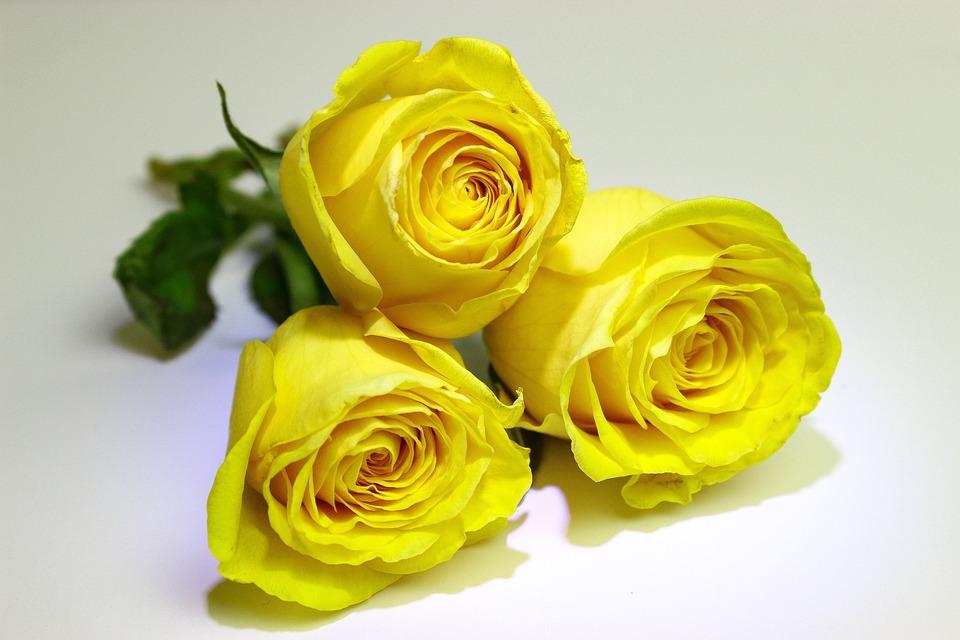 Roses Jaune Jaunes Photo Gratuite Sur Pixabay