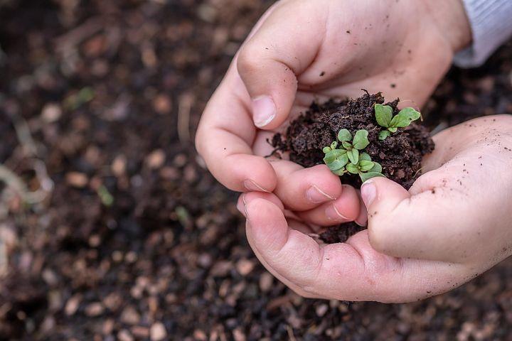 Keimlinge, Saat, Kinderhände, Wachstum
