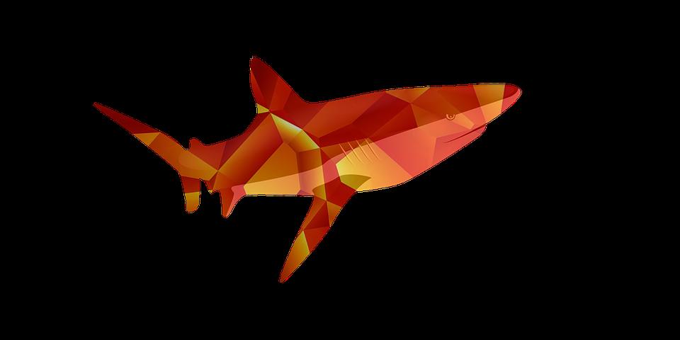 Ikan Penangkapan Jenis Gambar Gratis Di Pixabay