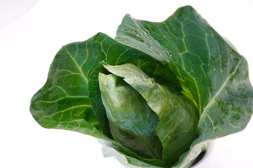 Pointed Cabbage, Kohl, Food, Vegetables