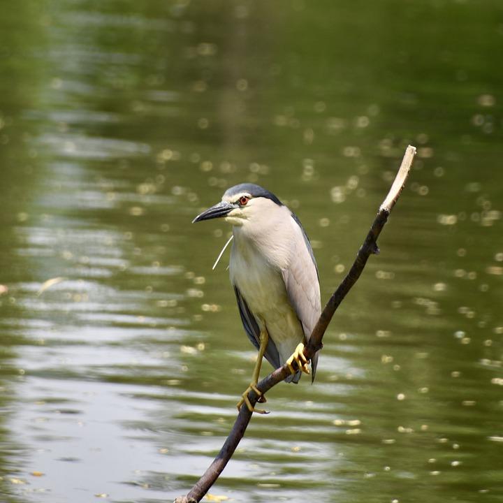 παλιό πουλί φωτογραφίες στο Κάλγκαρι πίπα