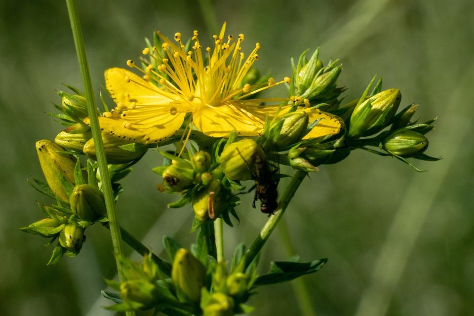 Fiori Selvatici Gialli.Fiore Giallo Gialli Fiori Foto Gratis Su Pixabay