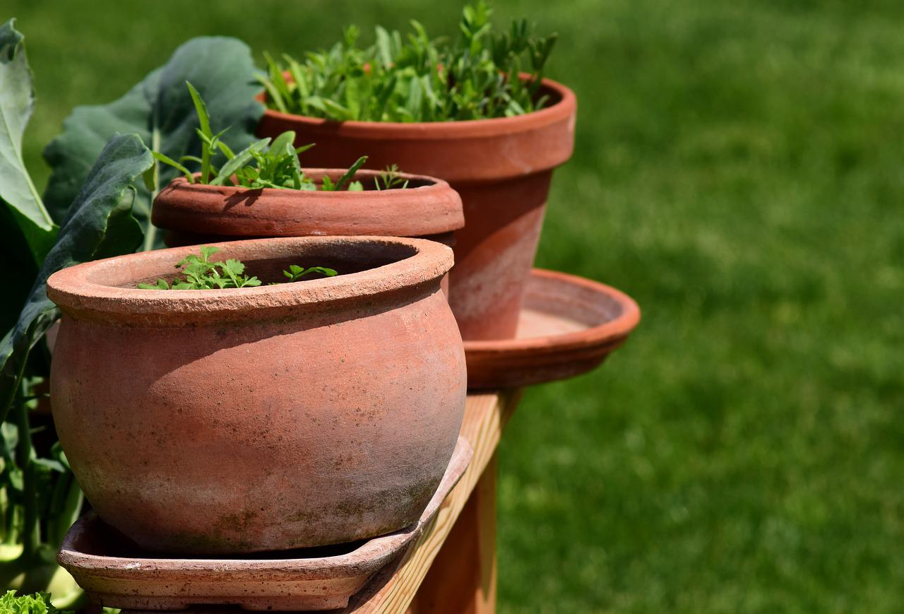 Ceramic pots with growing plants