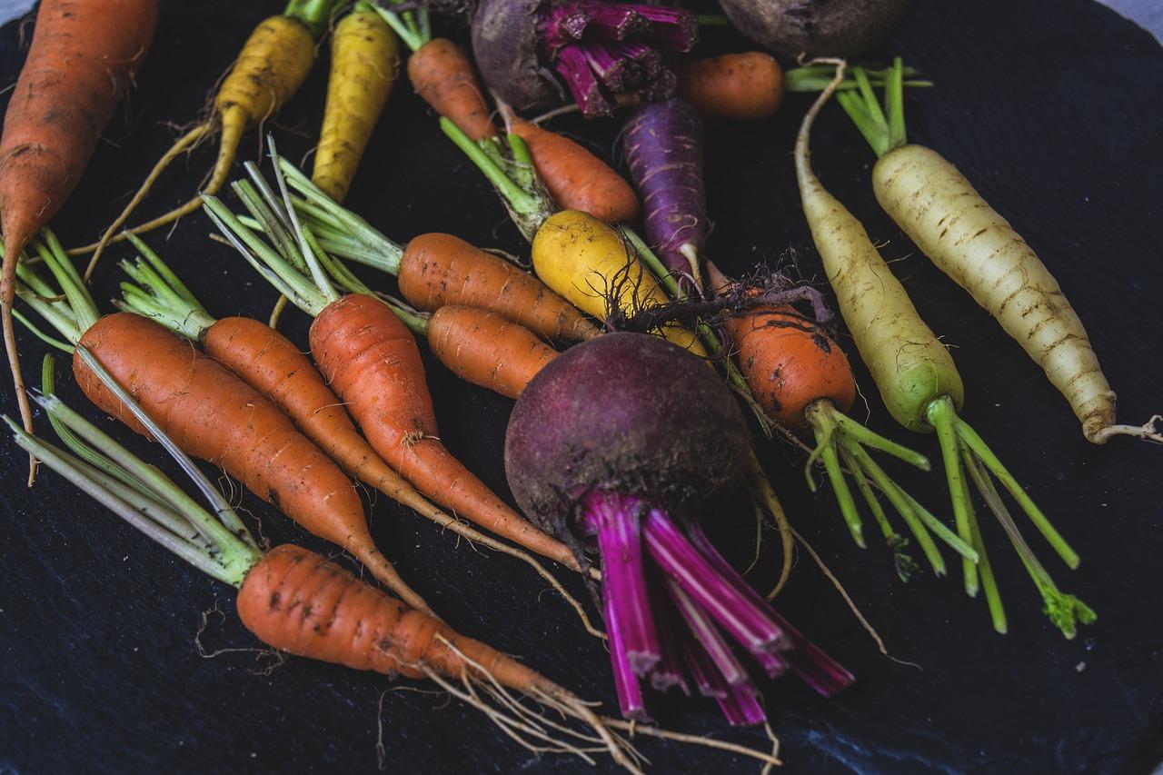 фадеев корнеплода моркови картинки одной стороны