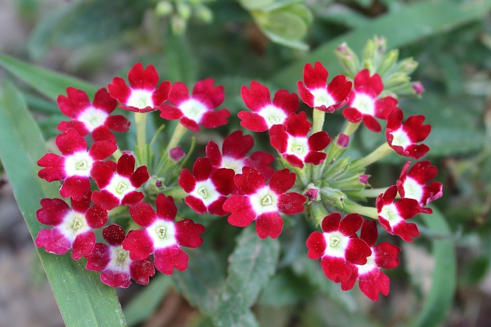 Berühmt Blumen Pflanze Sommer - Kostenloses Foto auf Pixabay &OR_44