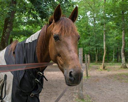 Horse, Portrait, Head, Paddock