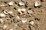 muszelki, piasek, plaża