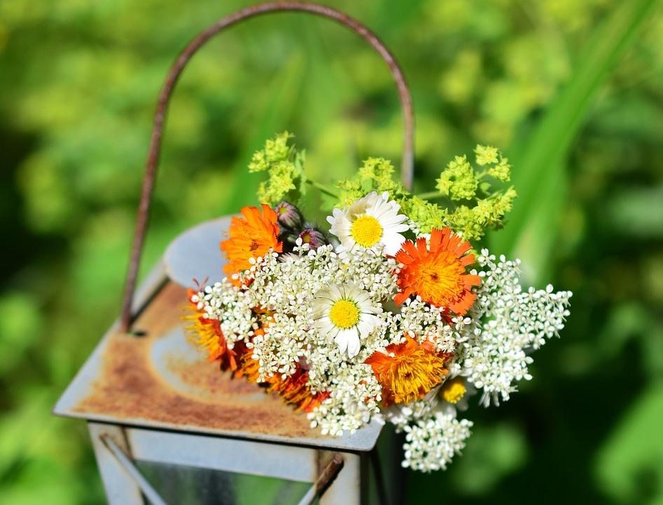 Flori Salbatice Wild Buchet Fotografie Gratuită Pe Pixabay