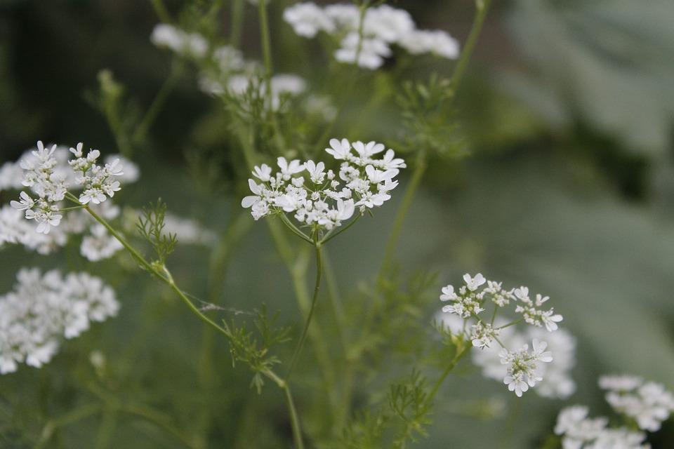 White Flower Plants · Free photo on Pixabay