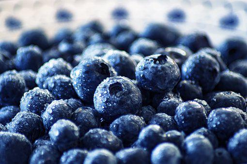 Blueberry Images  Pixabay  Download Free Pictures-4226