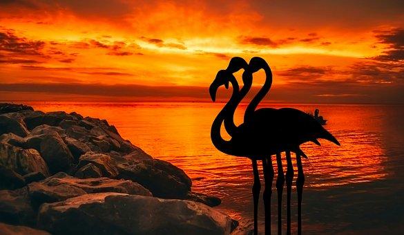 Flamingo, Dusk, Sunset, Roseus, Nature