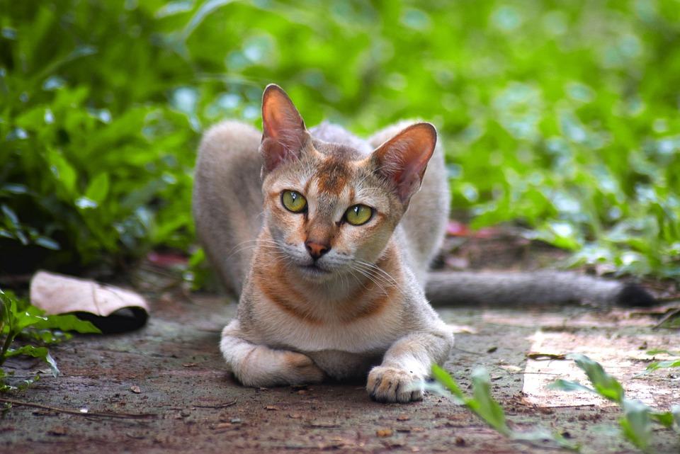 džin mačička