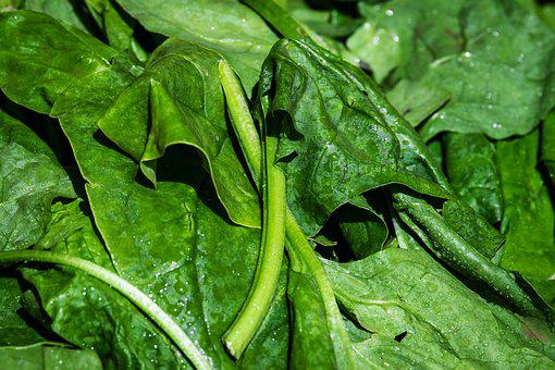 Spinach, Leaf Spinach, Vegetables