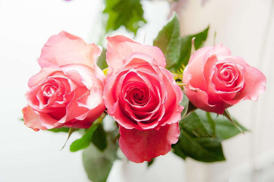 Rose Tre Petali Rosa - Foto gratis su Pixabay