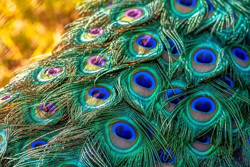indian peacock flute music free download