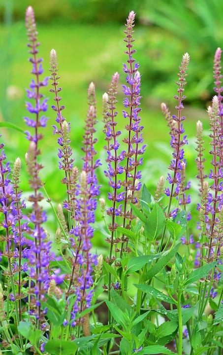 Perennial garden flowers free photo on pixabay perennial garden flowers garden purple flower mightylinksfo