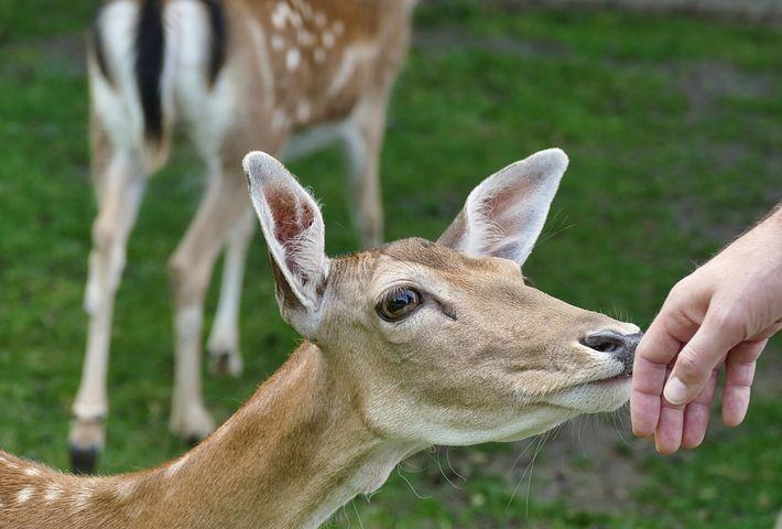 картинки европейских животных веранда витражным
