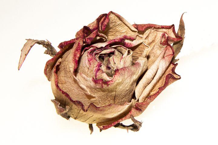 здоровья побольше, картинка засыхающего цветка блюдо фарша рисом