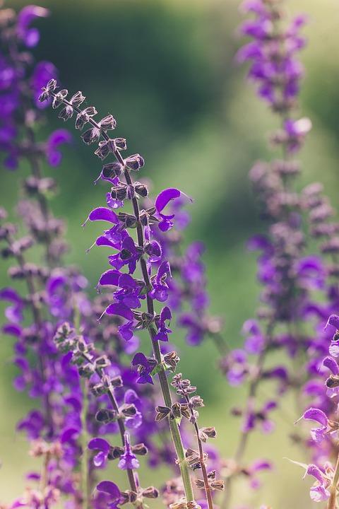 Flower purple flowers free photo on pixabay flower purple purple flowers flowers flower purple mightylinksfo