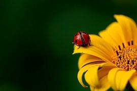 Ladybug, Insect, Beetle, Nature