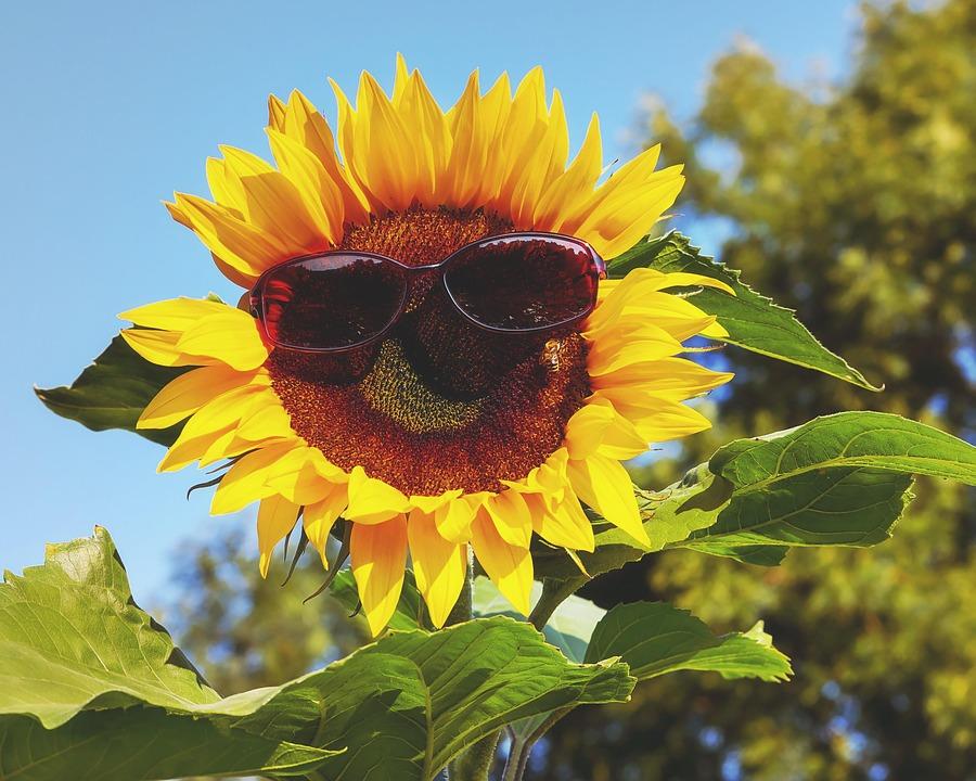 メガネ, サングラス, 太陽, 向日葵, 眼の保護, ファッショナブルな, 保護, 目をくらませる