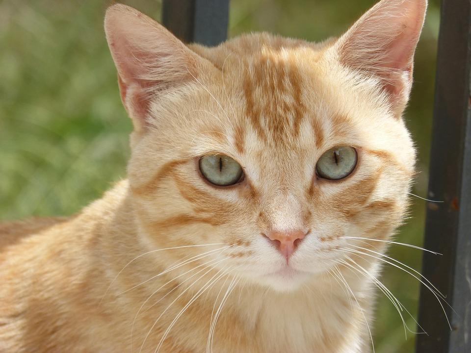 Blonde Cat picture 89